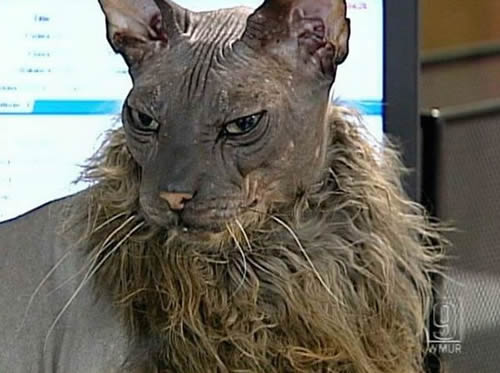 the most ugly cat ever