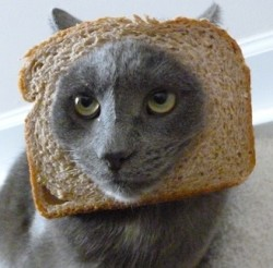 This Breaded Cat does not look happy with the new hype