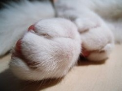 Furry cat paws are best with claws!
