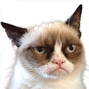 The cat and breed behind the Grumpy Cat | Cats Around The ...
