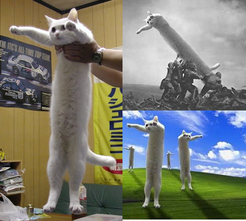 Long cat is long