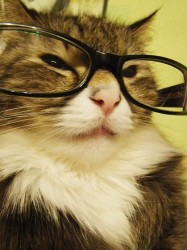 smart cat is smart