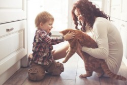 tips-on-taking-care-of-your-cat-3