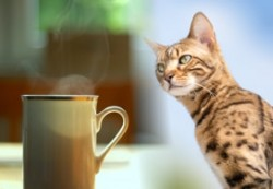 Enjoy cats and coffee at Cafe Felidae
