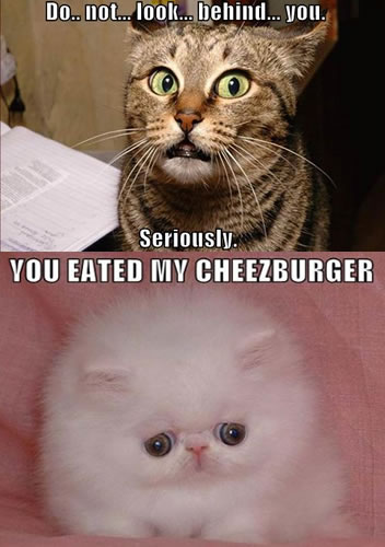 Lol Cats - I can haz cheezburger?