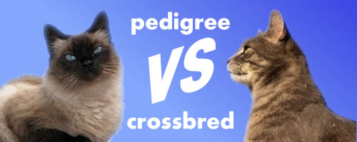 Pedigree vs Crossbred cats