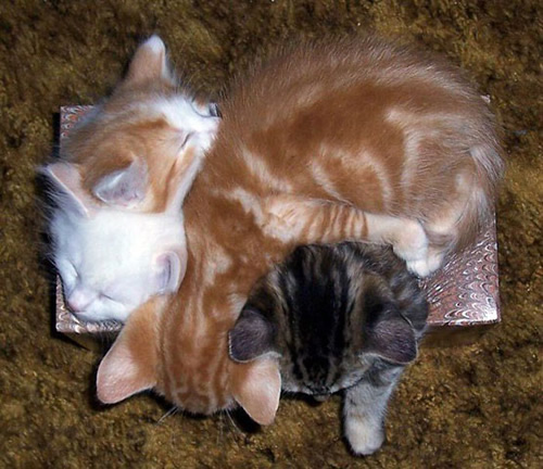 The Cutest Sleeping Cats And Kittens Top 10 Cats Around